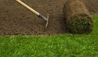 TOP GRASS FOR A LOW PRICE (FOR SALE & INSTALLATION SERVICE )