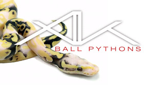 Various Ball Pythons available