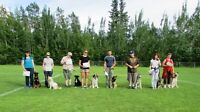 Top Dog Training Academy