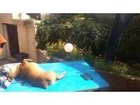 Sunny Double Room in veg/vegan house-share (Five-ways)