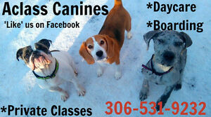 Private classes, Daycare and Boarding