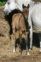 Performance prospect foals for sale