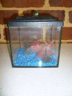 Variety of fish tanks
