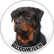 Rottweiler Car Sticker