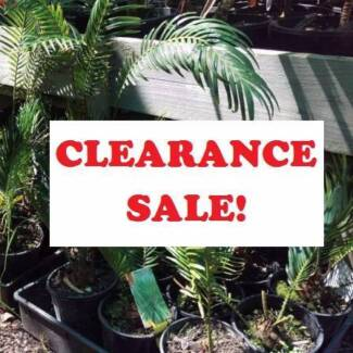 DISCOUNT PLANTS - CLEARANCE SALE - STARTING $5