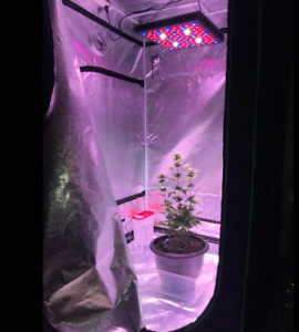 Indoor Grow Setup - Grow your own weed, or start some seeds!