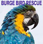 Burge Bird Rescue Feathers & Stuff