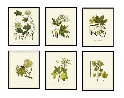 Set of 6 Vintage Botanical Art Print Poster Reproductions