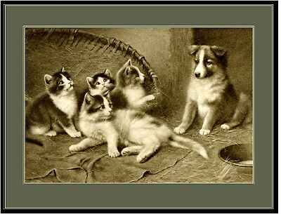 English Picture Art Print Collie Shepherd Pup Dog Cat Puppy Puppies Dogs Poster Cat Dog Art