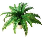 Large Artificial Plants