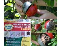 #cuttingglobe plant propagators for both trees and plants indoors and out