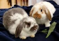 Beautiful bunnies!!