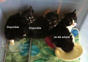 Chatons a donner