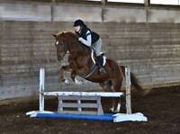 11 year old gelding for lease