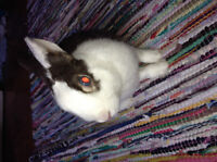 Small bunny in need of new home