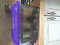 DWARF FROGSx2 & NEON, 2 GALL TANK GRAVEL & ALL FOOD WATER COND