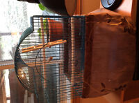 Finch with Cage For sale