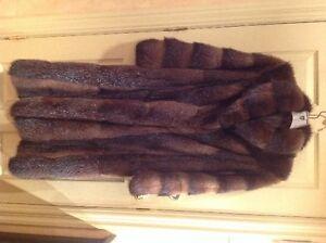 Manteau de rat musqué