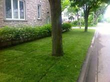 Instant Grass Lawn Turf Installers Salisbury Salisbury Area Preview