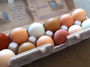 We have Fresh Daily Chicken Hatching Fertiles Eggs