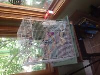 Bird cage with Miss tray