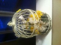Bird Cage Decorations - Great for Weddings