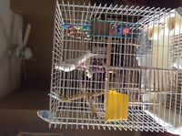 2 Budgies and large cage