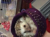 Hedgehog with cage