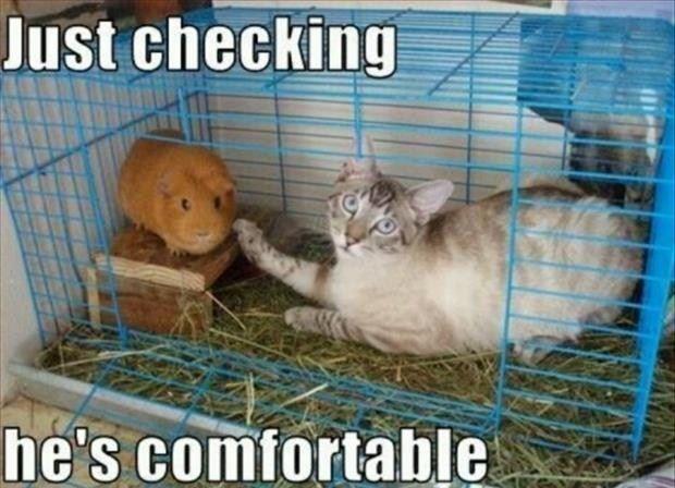Funny Cat Just Checking Refrigerator / Locker  Magnet