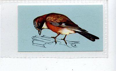 (Jd4209) TETLEY,BRITISH BIRDS,JAY,1970,#20