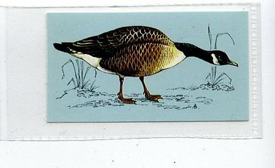 (Jd4257) TETLEY,BRITISH BIRDS,CANADA GOOSE,1970,#44