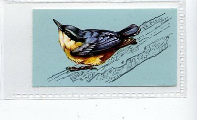 (Jd4221) TETLEY,BRITISH BIRDS,NUTHATCH,1970,#26