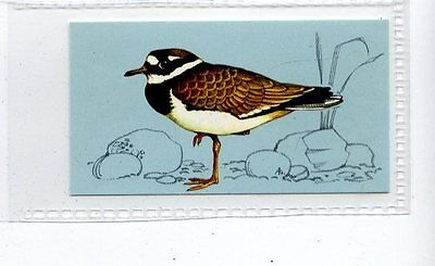 (Jd4241) TETLEY,BRITISH BIRDS,RINGED PLOVER,1970,#36