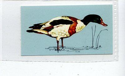 (Jd4233) TETLEY,BRITISH BIRDS,SHELDUCK,1970,#32