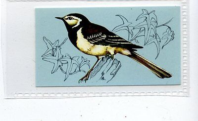 (Jd4261) TETLEY,BRITISH BIRDS,PIED WAGTAIL,1970,#46