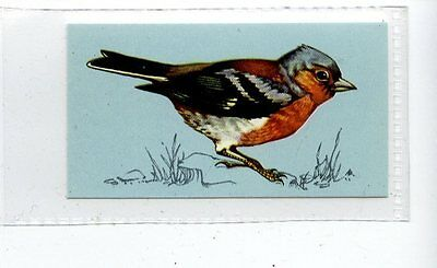 (Jd4177) TETLEY,BRITISH BIRDS,CHAFFINCH,1970,#4