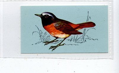 (Jd4217) TETLEY,BRITISH BIRDS,REDSTART,1970,#24