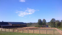 Farm, Horse,Equine, Cattle,Sheep, Home,Rural, Fence of all types
