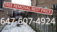 Small tree removal all areas. 647-607-4924.