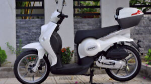 50cc Benelli Pepe Italian Brand Gas Scooter-Moped's