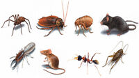 Guaranteed Pest Control – Special Low Price Package for Mice