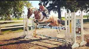 Show mare for part-board  Stratford Kitchener Area image 2