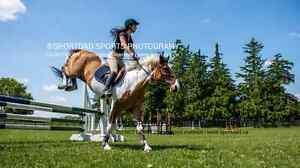 Show mare for part-board  Stratford Kitchener Area image 4