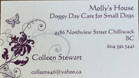 Molly's House Doggy Day Care for Small Dogs