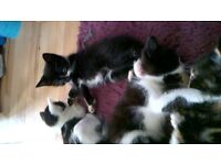 kittens ready now*