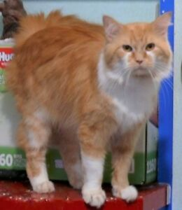 Elgin - fluffy 1 year old male available for adoption