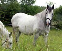 A wonderful great producing broodmare