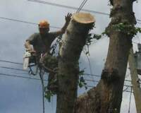 Longwood tree services