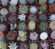Cactus Plants Lot
