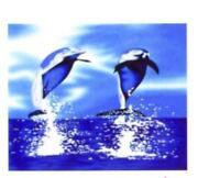 Dolphin Bedding